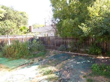 Backyard (Before)